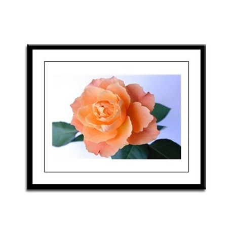 Orange Rose Framed Panel Print