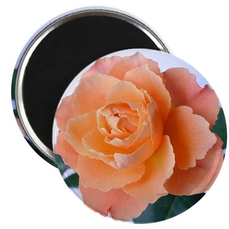Orange Rose 2.25&quot; Magnet (100 pack)