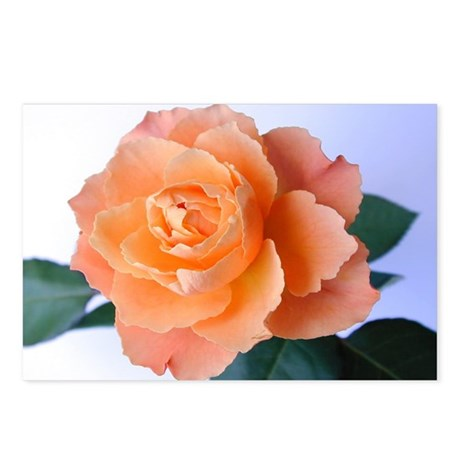 Orange Rose Postcards (Package of 8)