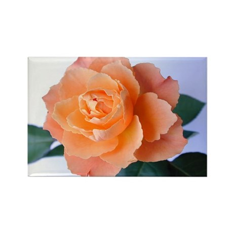 Orange Rose Rectangle Magnet (100 pack)