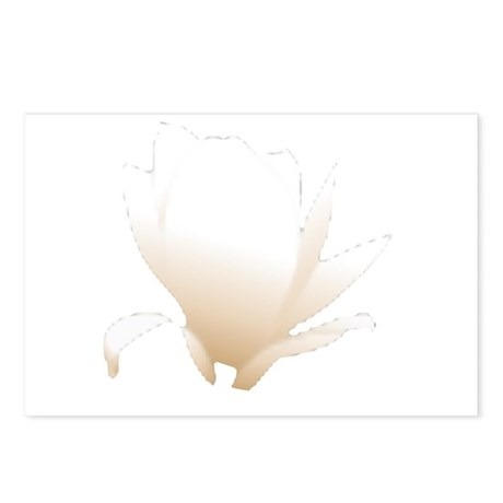 White Lily Postcards (Package of 8)