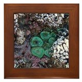 Sea Life Frame Tile