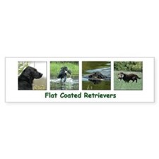 Flat Coated Retriever Bumper Bumper Sticker