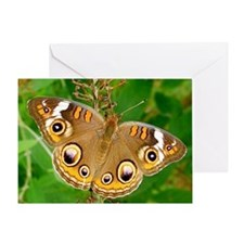 Buckeye Butterfly Photography Note C Greeting Card