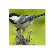 "chickadee Square Sticker 3"" x 3"""