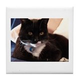 AEUC Blk & Wht Cat Tile Coaster