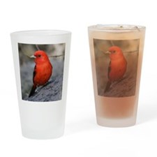 Tanager Drinking Glass
