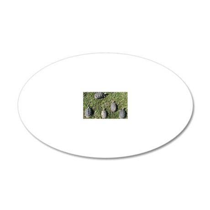 AerialShot 20x12 Oval Wall Decal