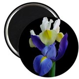 Blue &amp; Yellow Iris Flowers #1b Magnet