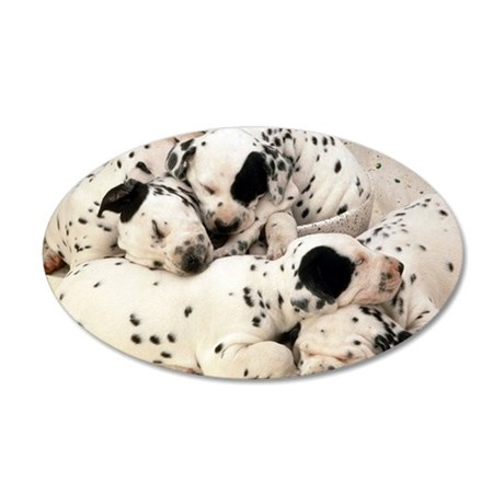 Dalmation sm fr pan print 35x21 Oval Wall Decal