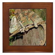 Copy of IMG_5208 Framed Tile