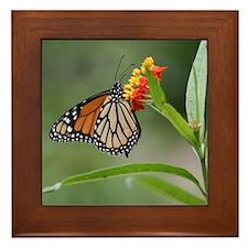 Copy of IMG_5308 Framed Tile