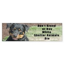 Don't Breed While Shelter Animals Bumper Bumper Sticker