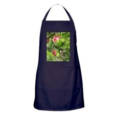 Hum2.34x3.2SF Apron (dark)