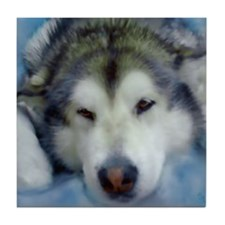 Cute Malamute dog Tile Coaster