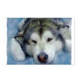 Funny Sled dog Postcards (Package of 8)