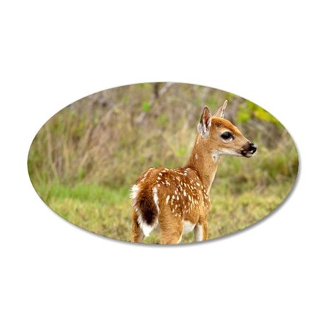 Key Deer fawn (Odocoileus vi 35x21 Oval Wall Decal
