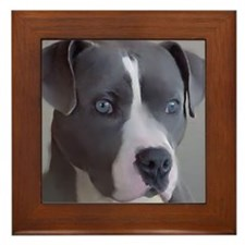 Unique Amstaff art Framed Tile