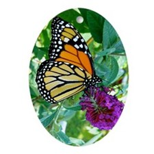 Monarch Butterfly 3G iPhone Hard Cas Oval Ornament