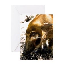 (3) Pig Profile  1966 Greeting Card
