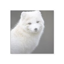 "Artic Fox Square Sticker 3"" x 3"""