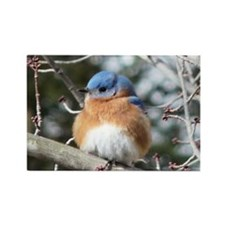 BlueBird4.58x2.91 Rectangle Magnet