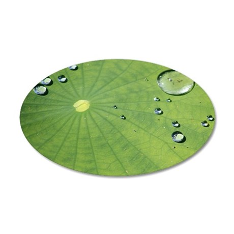 Dew on a Lilypad 35x21 Oval Wall Decal