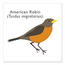 "american robin Square Car Magnet 3"" x 3"""