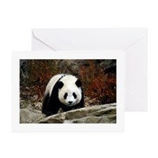 Tai Shan Head On Greeting Cards (Pk of 10)