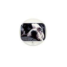 Sad Boston Terrier Mini Button (10 pack)