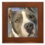 Unique Blue pitbull Framed Tile