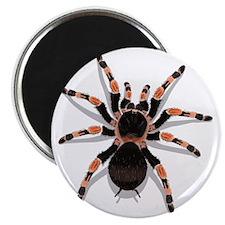 tarantula_CP Magnet
