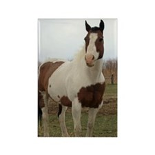 Paint horse,2 Rectangle Magnet