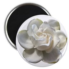 gardenia button Magnet