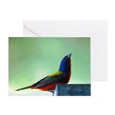 Male Painted Bunting 1 Greeting Card
