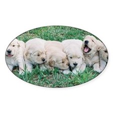 Golden Retriever Puppy Aluminum Lic Decal