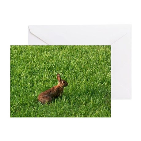Spring Easter Bunny Greeting Cards (Pk of 10)