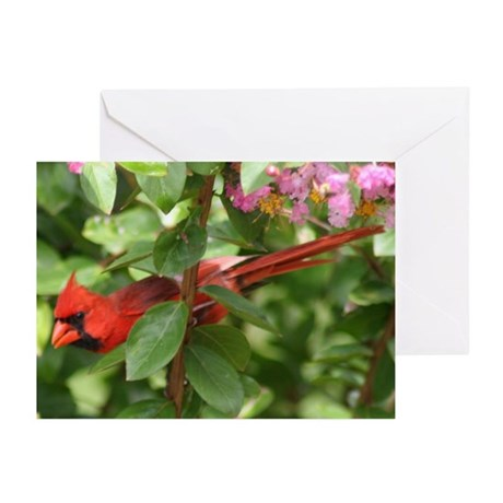 Red Bird Greeting Cards (Pk of 10)