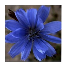 Wild Chicory Tile Coaster