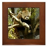 Red Panda 2 Framed Tile