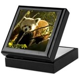 Red Panda 1 Keepsake Box