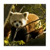 Red Panda 1 Tile Coaster