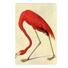 audubon 4 Postcards (Package of 8)