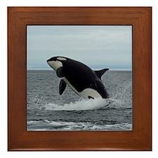 IMG_2447 - Copy Framed Tile