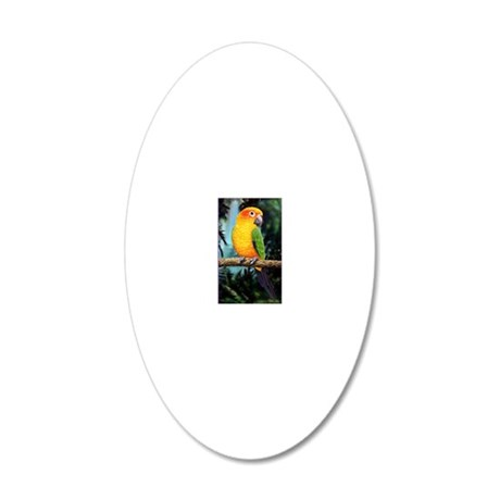 Sun Conure 20x12 Oval Wall Decal