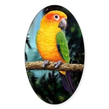 Sun Conure Decal