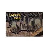 Ring-tailed Lemur Rectangle Magnet (10 pack)