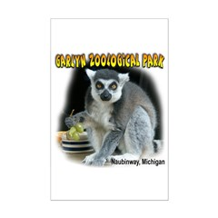 Ring-tailed Lemur Posters