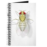 Drosophila Journal