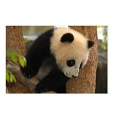 Cute Panda Cub Postcards (Package of 8)